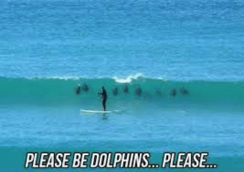 please-be-dolphins-please-search-surfing-memes-on-me-me-50170012